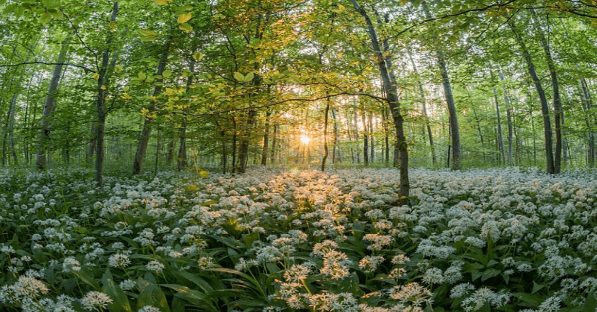 ervas-de-limpeza-natural