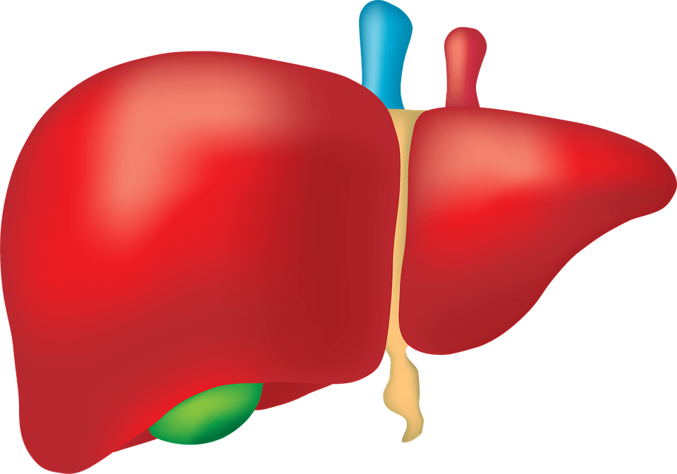 liver XHj4jD